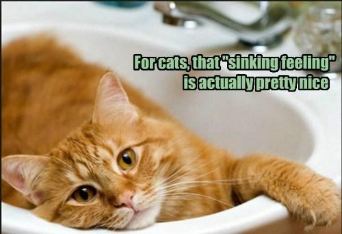 Cats fun puns sink - 8175403264