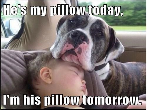 cute dogs kids pillows sleeping - 8175415040