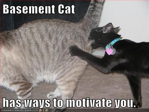 Cats basement cat motivation funny - 8175665664