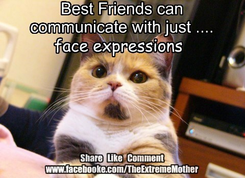 Best Friends can communicate with just .... Share Like Comment www.facebooke.com/TheExtremeMother face expressions