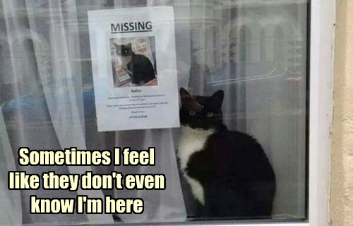 Cats confused funny missing - 8175814656
