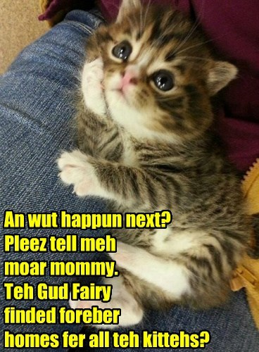 An wut happun next? Pleez tell meh moar mommy. Teh Gud Fairy  finded foreber  homes fer all teh kittehs?