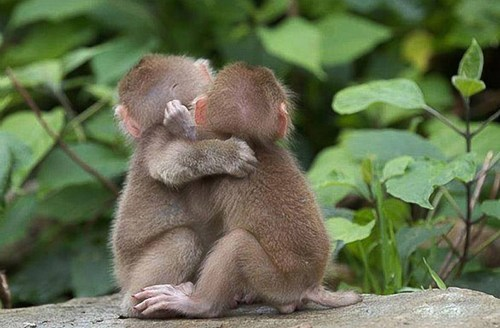 cute friends hug monkeys picture - 8176035840