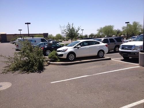 douchebag parkers cars parking - 8176082176