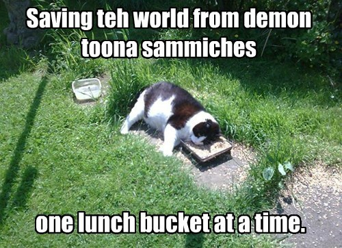 Cats rescue funny tuna hero