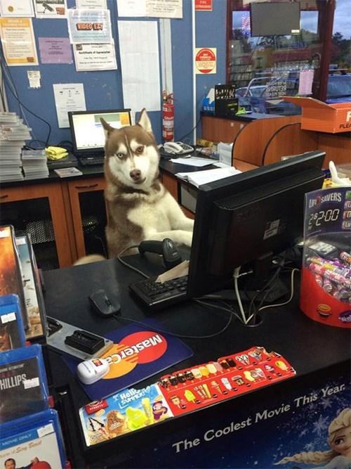 dogs monday thru friday work - 8176199424
