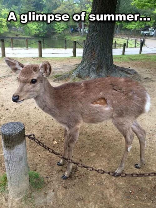 deer fur coat summer - 8176224000