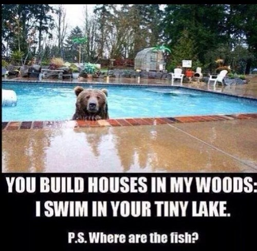 bears,fish,pools