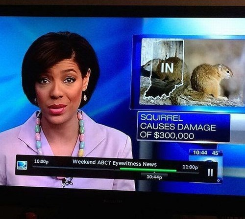 Probably bad News news squirrels weird