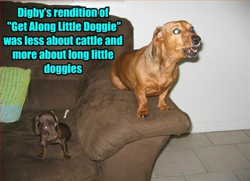 "Digby's rendition of ""Get Along Little Doggie"" was less about cattle and more about long little doggies"