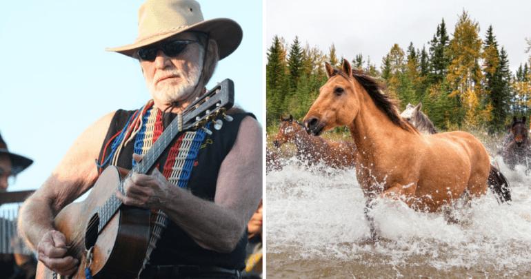 ranch texas horses rescue jo38ma3 - 8177157