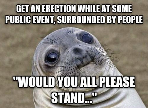 awkward seal awkward situation seal - 8177323520