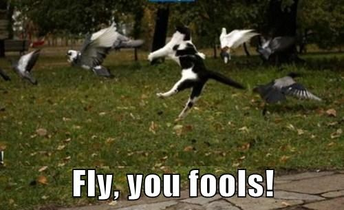 Cats birds funny wizard of oz - 8177395968