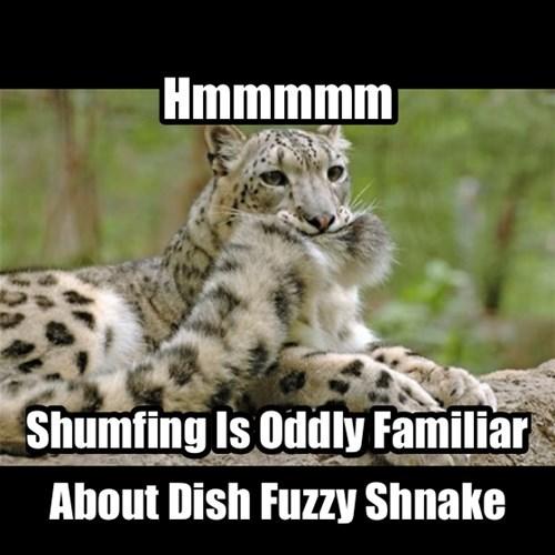 funny leopards hunt snakes - 8177448192