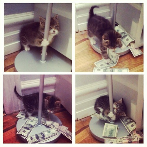 stripping Cats funny money - 8177480960