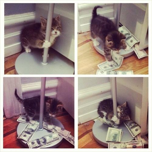 Cats funny money - 8177480960