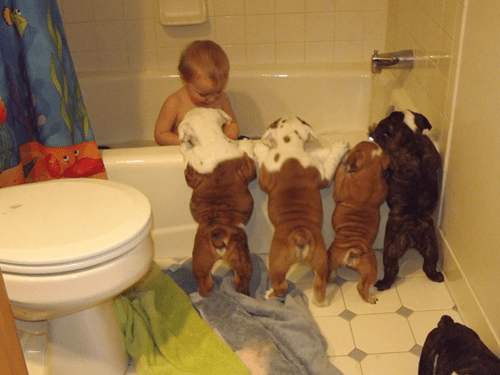 baby,puppy,parenting,bulldog