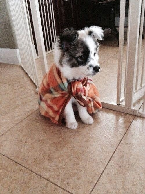 capes,puppies,superheros