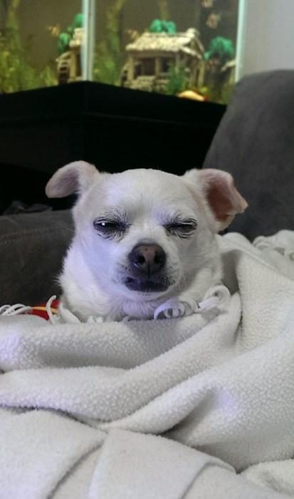 dogs,cranky,funny,sleeping