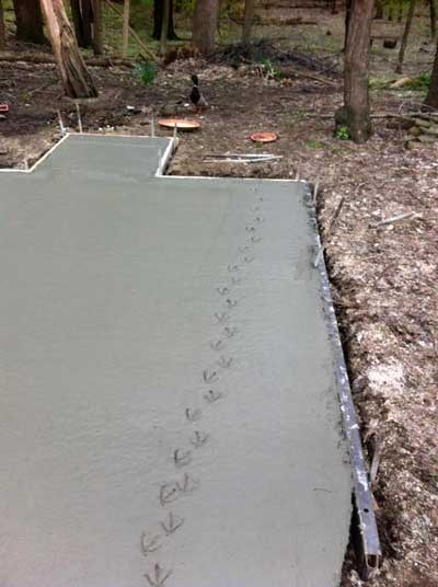 animals duck cement construction - 8177656576