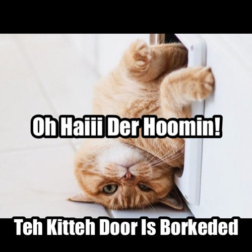 cat door borked forgot how to Cats - 8177812224