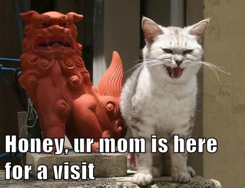 hiss,mother in law,Cats,funny