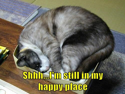 Cats boxes funny happy place - 8177838848