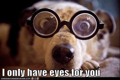dogs glasses puns funny - 8177860864
