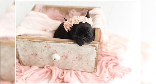 newborn pup