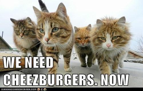 Cheezburger Image 8178156800