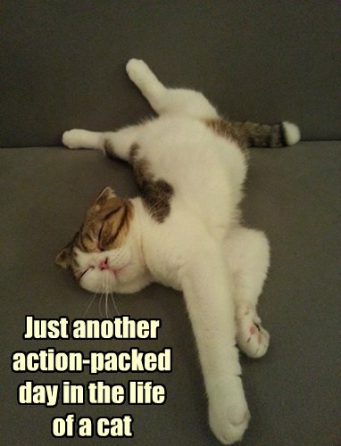 Just another action-packed day in the life of a cat