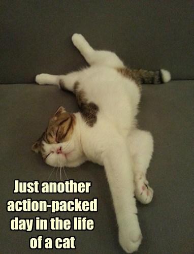 Cats lazy funny - 8178386176