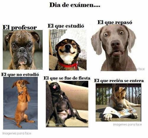 bromas perros Memes animales - 8178568704