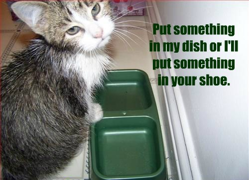 Put something in my dish or I'll put something in your shoe.