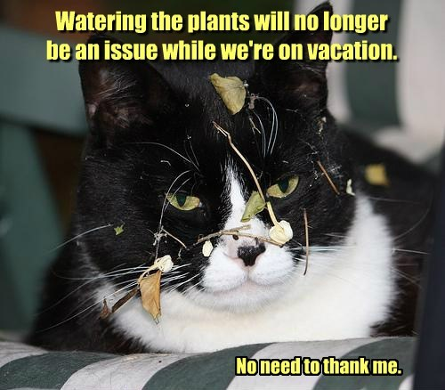 Watering the plants will no longer be an issue while we're on vacation. No need to thank me.