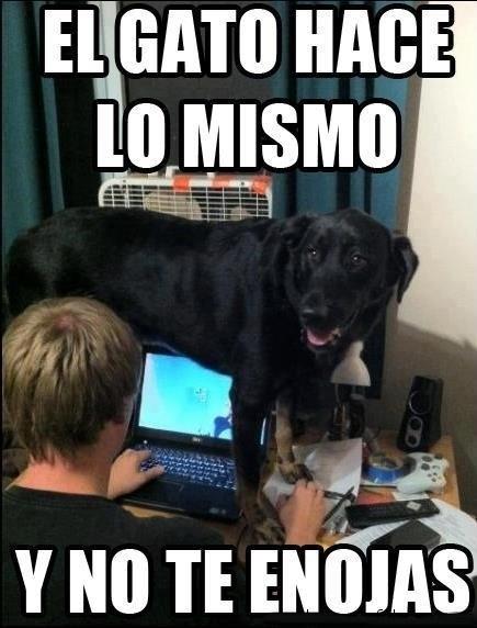 gatos bromas perros Memes animales - 8178766080