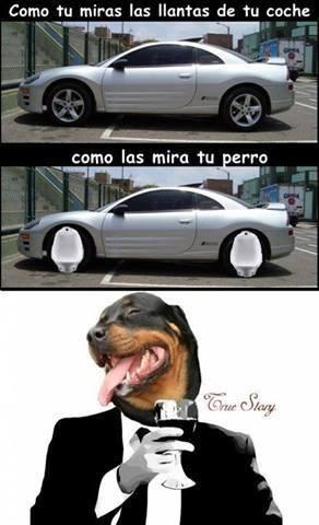 bromas perros Memes animales - 8178919936