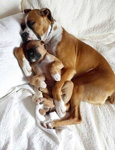 so cute dogs snuggle mothers day mom