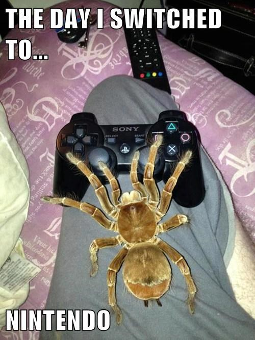 funny,playstation,spiders,video games