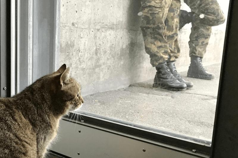 cute broccoli army Cats - 8179461