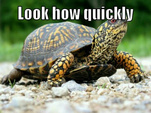 turtles slow funny - 8179547136