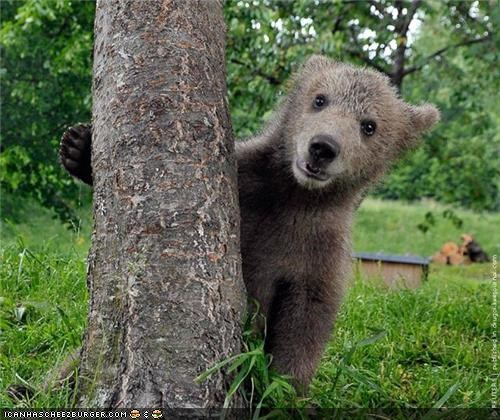 trees climbing bears cute - 8179641856