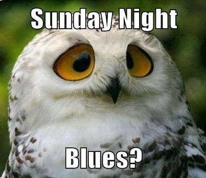 Sunday Night Blues Cheezburger Funny Memes Funny Pictures