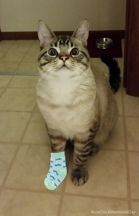 begging,noms,Cats,funny