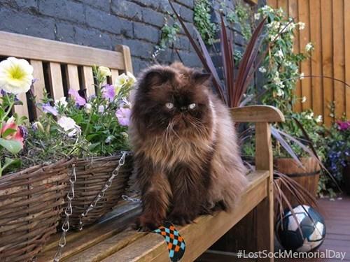 Cats garden funny spring - 8180161024