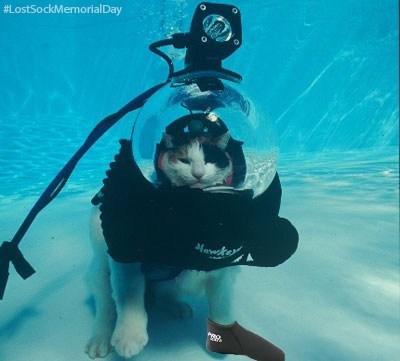 Cats fish hungry scuba - 8180183552