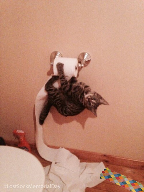 Cats bathroom mischief toilet paper