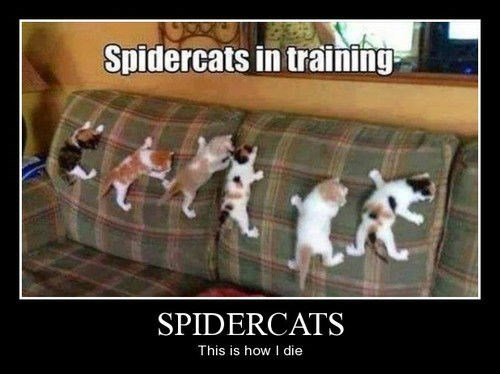 Cats funny spiders scary wtf - 8180219648