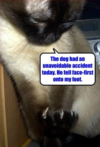 dogs accident claws Cats funny - 8180289024
