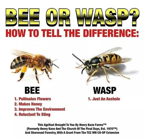 bees funny science wasp